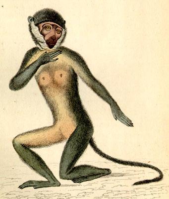 buffon monkey