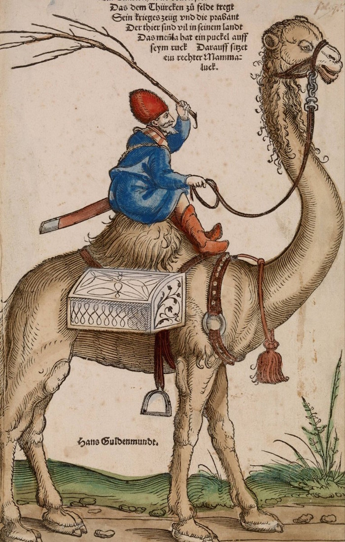 schon rider on a dromedary