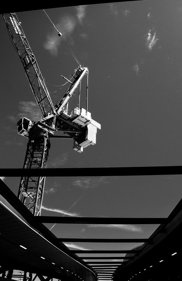 cranes9