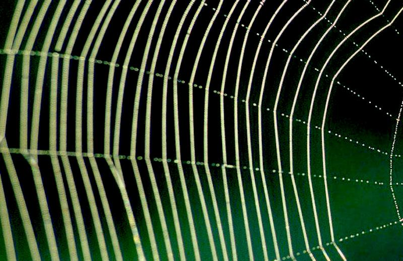 web-10