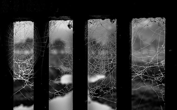 web-11