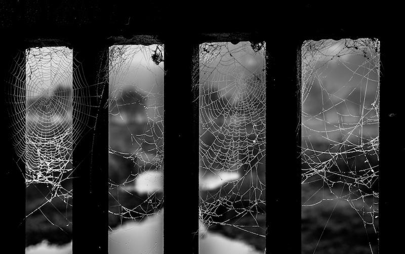 web 17