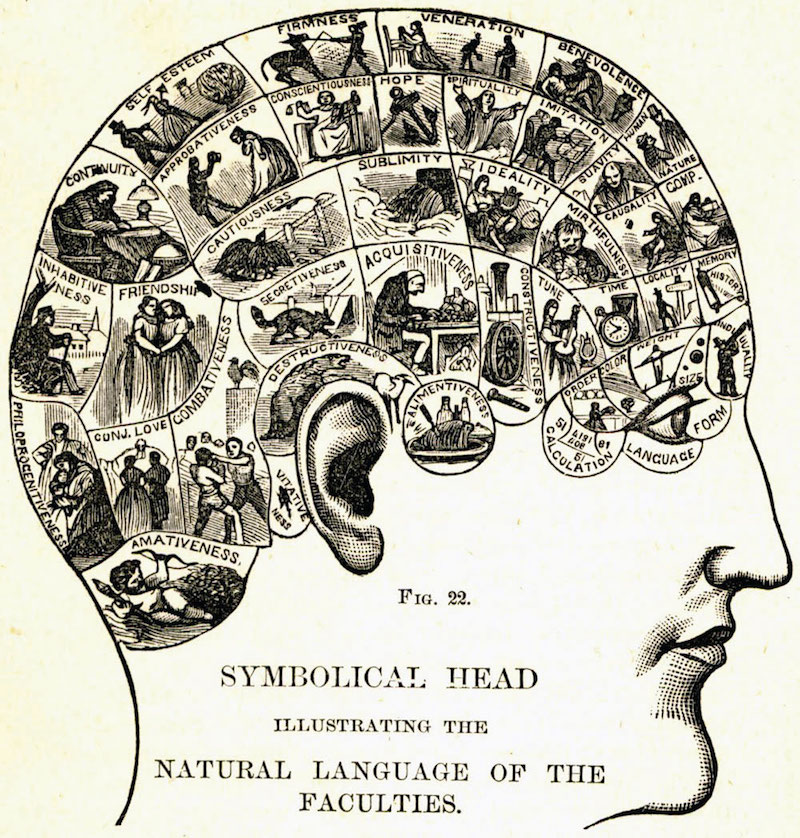 Phrenological Head