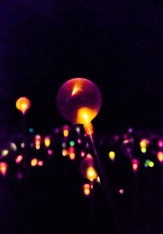 Field of Light 10