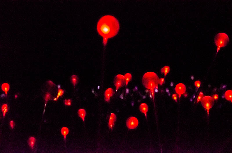 Field of Light 8