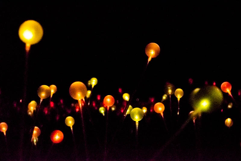Field of Light 9