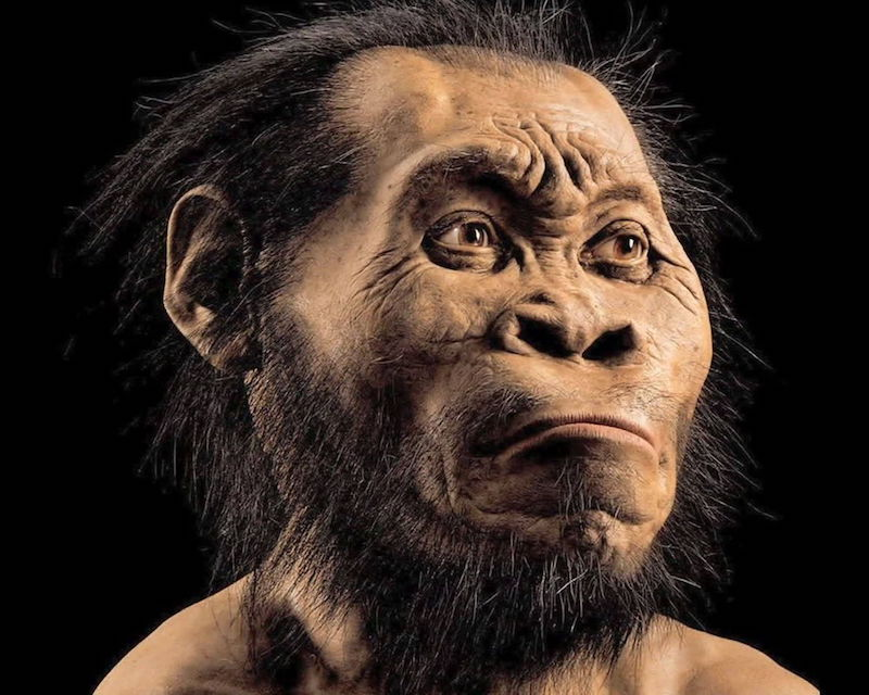 Homo naledi reconstruction