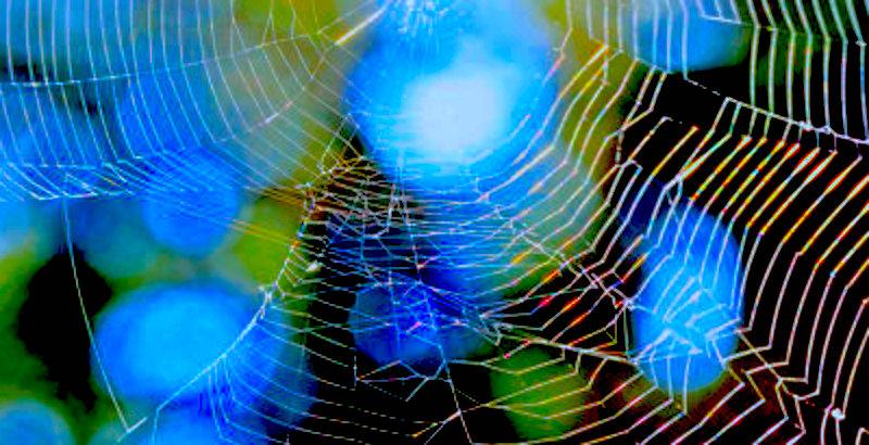 web 34