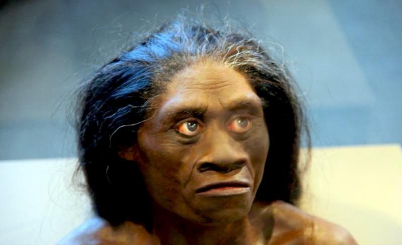 Homo Floresiensis, adult female,John Gurche, National Museum of Natural History