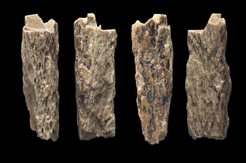 Bone fragments of Neaderthal:Denisoval hybrid