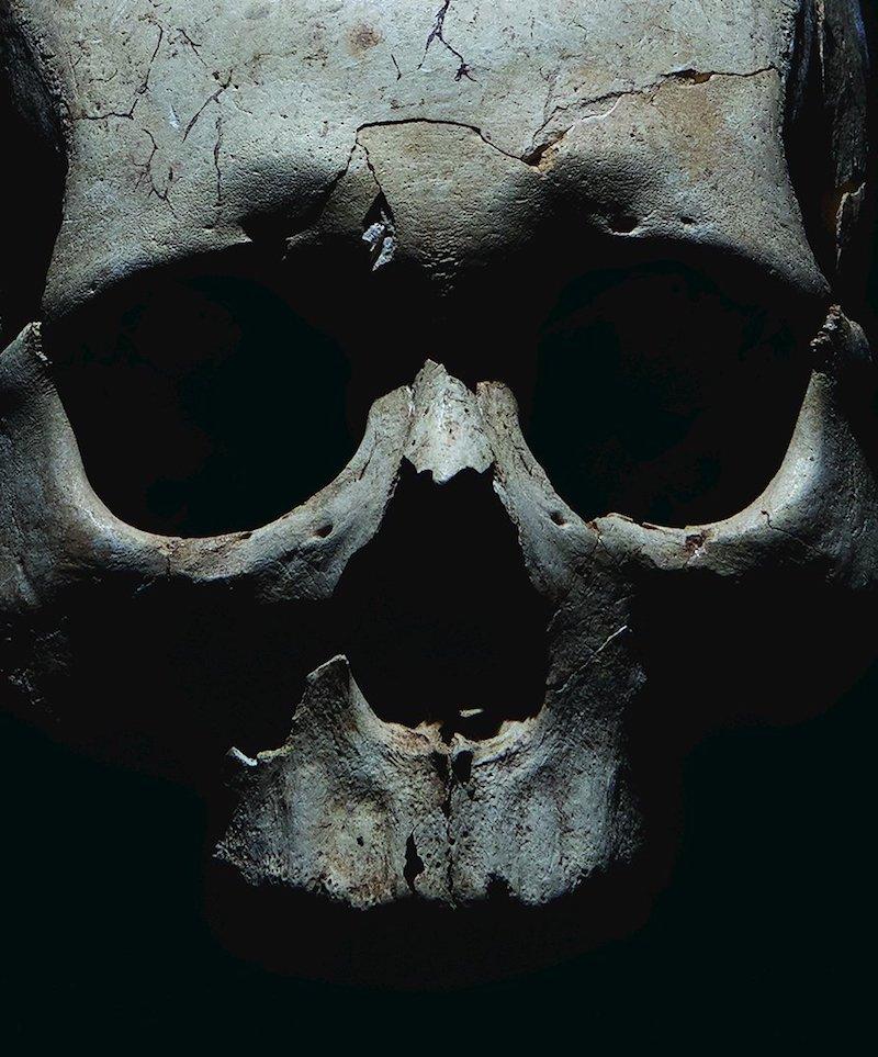 skull from prehistoric burial site near teouma bay, vanuatu david maurice smith:new york times