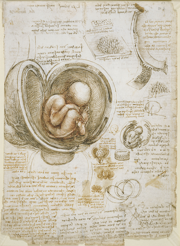 Leonardo Studies of the foetus in the womb
