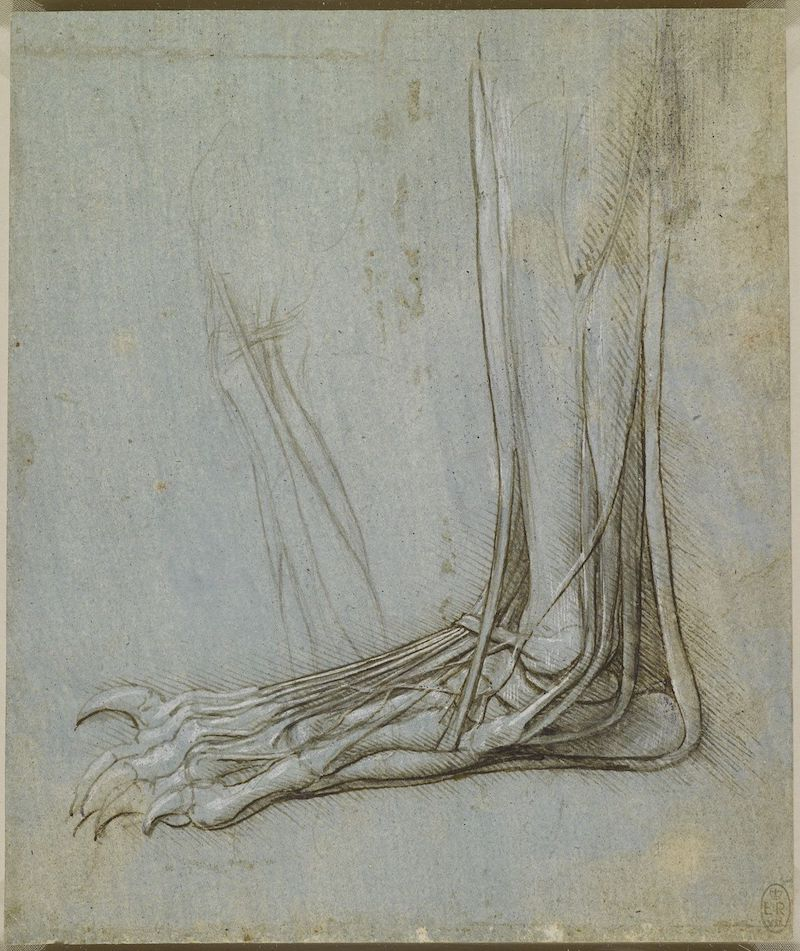 Leonardo The foot of a bear
